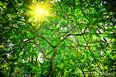 Sun shining through tree