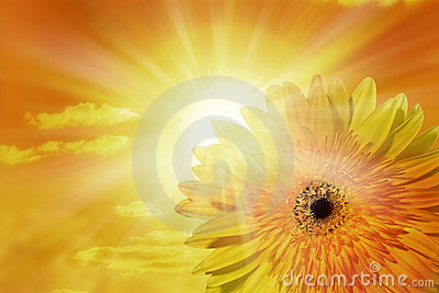 Sun Sky Flower Background