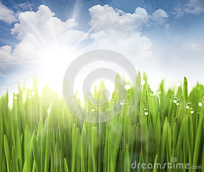 Sun, Sky and Grass with drops