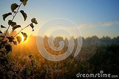 Sun and spiderweb