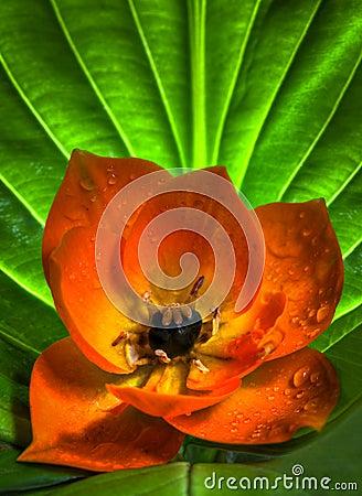 Sun Star flower