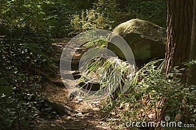 Sun sulla via e sulla roccia