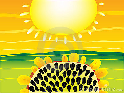 Sun and Sunflower Background