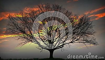 Sun Tree in setting Sun