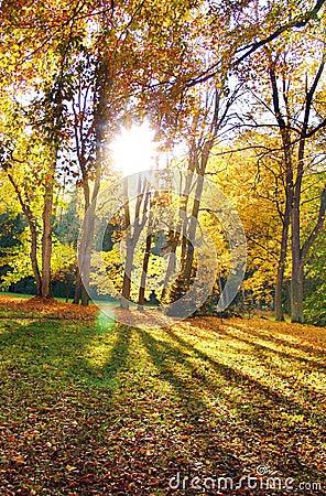 The Sun & Trees
