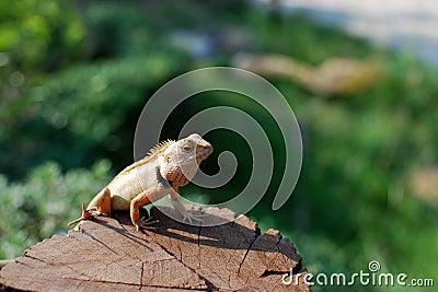 The sunbathe chameleon