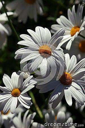 Sunbathed flowers