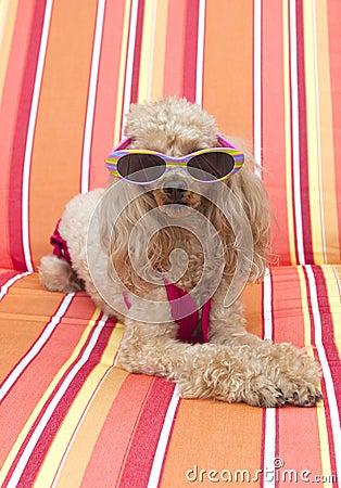 Free Sunbathing Royalty Free Stock Photo - 17281445