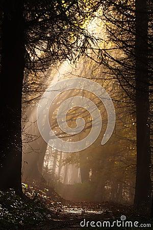 Free Sunbeam Stock Image - 3071401