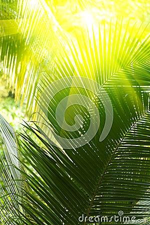 Sunbeam and palm tree