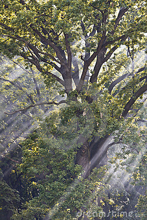 Sunbeams through branches