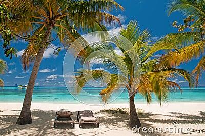 Sunbeds auf einem tropischen Strand