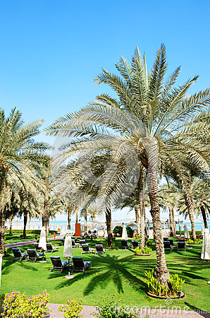 Sunbeds on the green lawn and palm tree shadow in luxury hotel