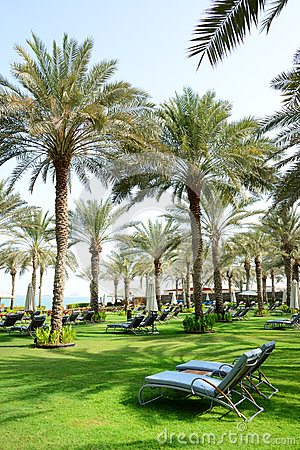 Sunbeds on the green lawn and palm tree shadows in luxury hotel