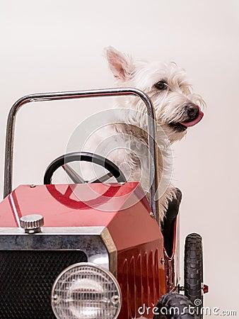 Sunday Driver - Dog driving car
