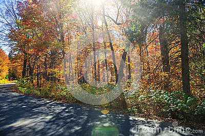 Sunflare in fall forest