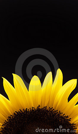 Free Sunflower Stock Images - 10695674