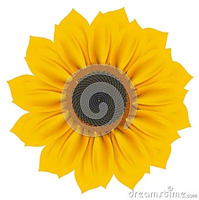 Free Sunflower Stock Photography - 13393972