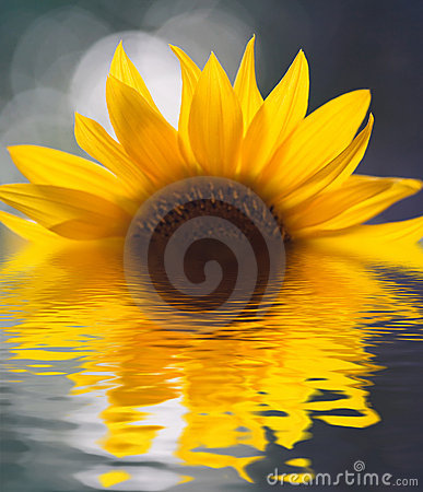 Free Sunflower Stock Image - 2108601