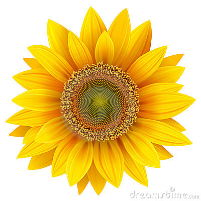 Free Sunflower Royalty Free Stock Photo - 21912815