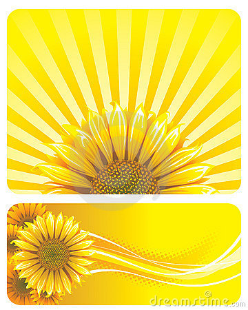Free SUNFLOWER Royalty Free Stock Photography - 8809947