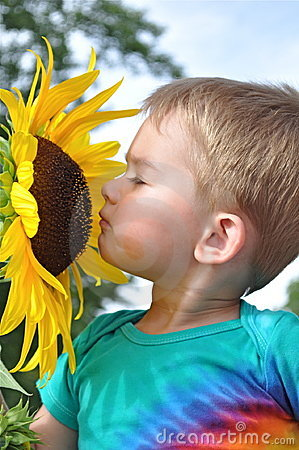 Free Sunflower And Boy Royalty Free Stock Image - 12817236
