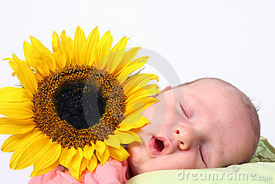 Sunflower baby