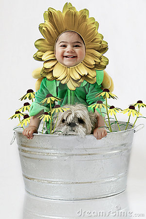 Sunflower baby4