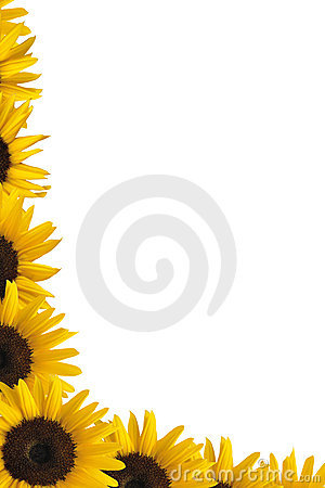 Free Sunflower Border Royalty Free Stock Images - 17071179