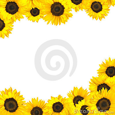 Sunflower Border Isolated On White Royalty Free Stock ...