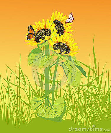 Sunflower with butterfly on the yellow background