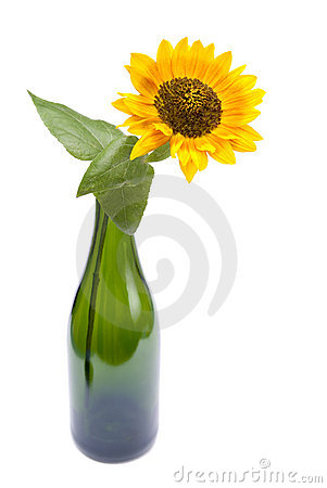 Sunflower in champagne
