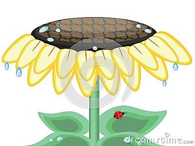 Sunflower CMYK