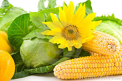 Sunflower, corn, cabbage and pumpkin