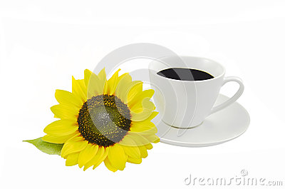 Sunflower and cup of coffee