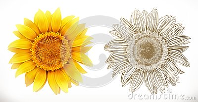 Sunflower. 3d realism. Vector illustration Vector Illustration