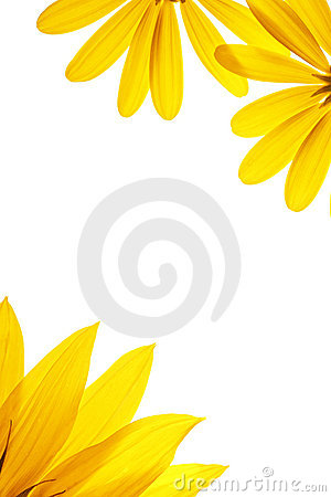 Free Sunflower Details Royalty Free Stock Image - 2248766