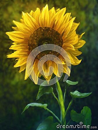 Sunflower - Digital Painting