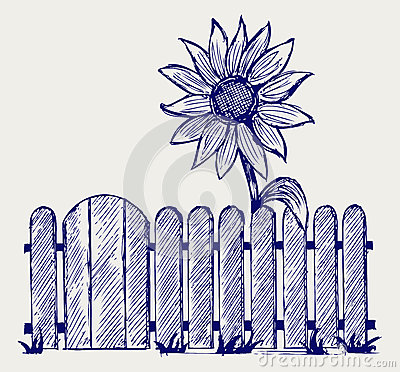 Sunflower and fence
