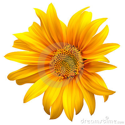 Sunflower flower vector