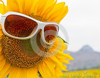 Sunflower with Glasses