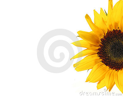 Sunflower Half Stock Image Image 442041