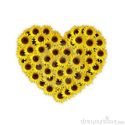 Sunflower Heart Royalty Free Stock Photo Image 7932755