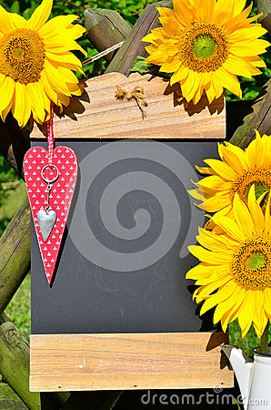 Sunflower heart red love
