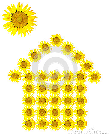 Sunflower home image isolated