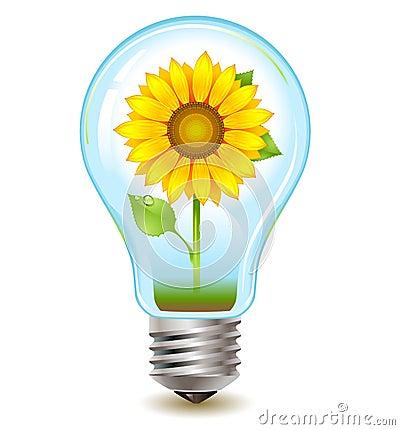 Sunflower inside