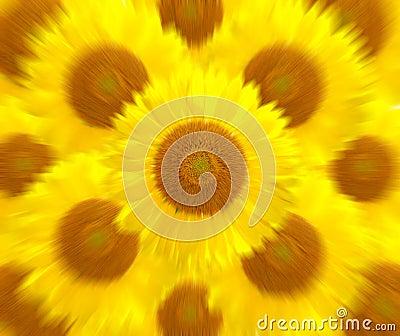 Sunflower more motion zoom blur background