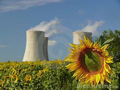 Sunflower with nuclear power station