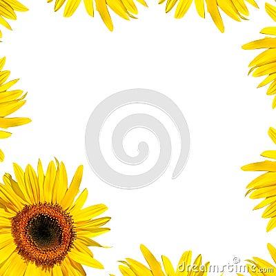 Free Sunflower Petal Beauty Stock Photography - 6512122