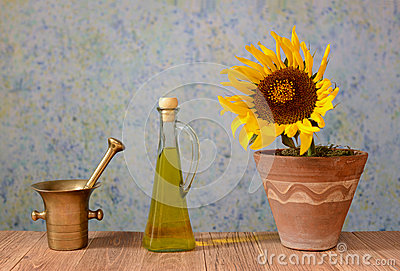 A sunflower in a pot with oil